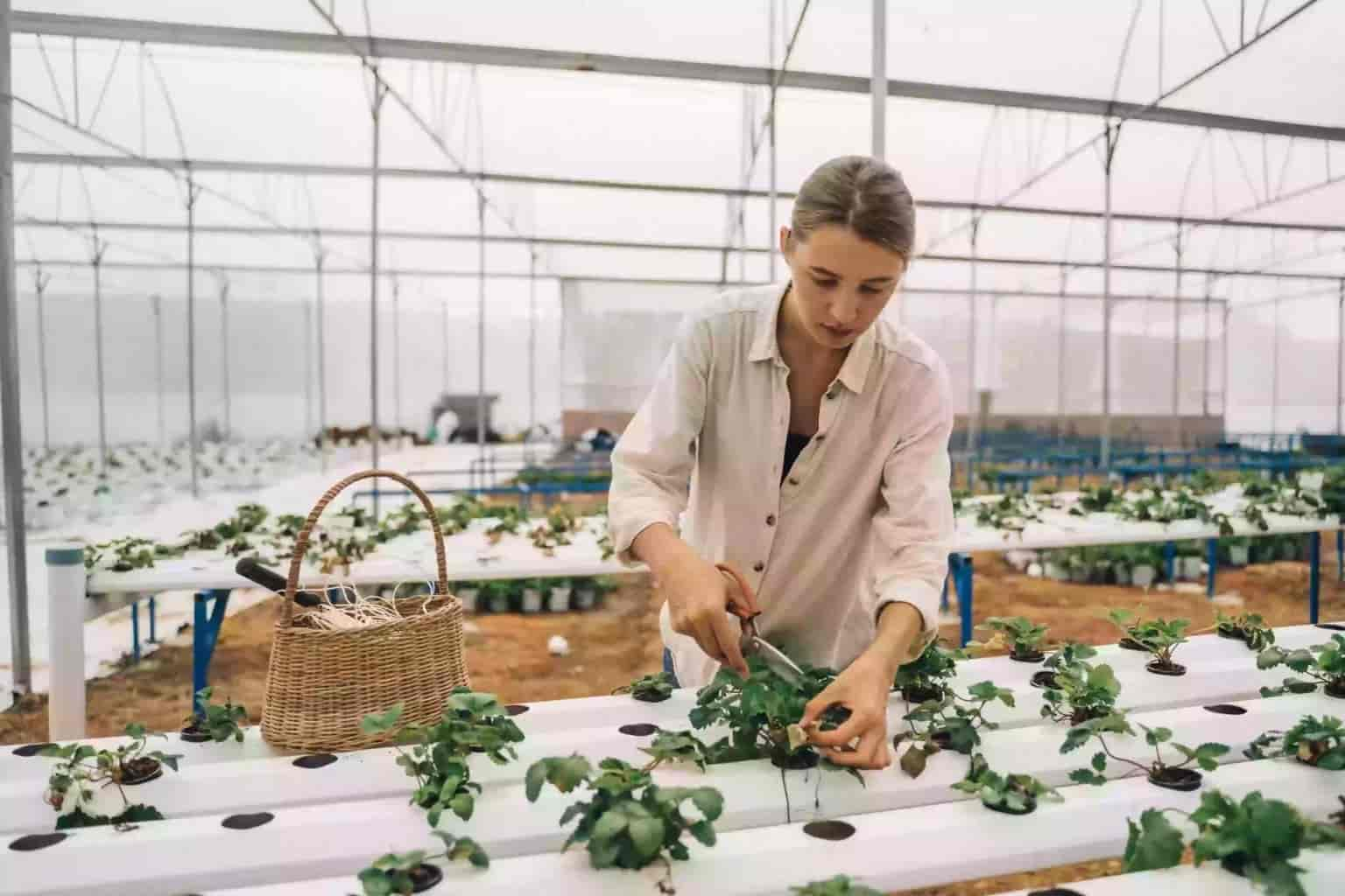 What is hydroponics? Methods of Hydroponics Agriculture Novel