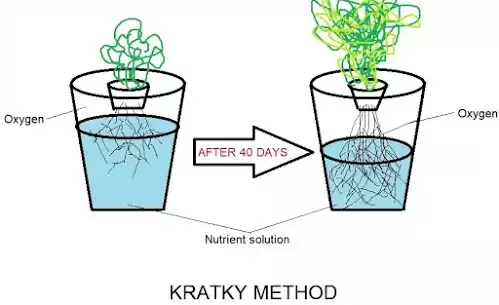 What is Kratky method of hydroponics Agriculture Novel