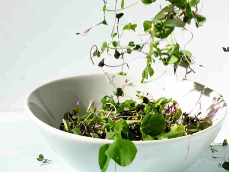 What is microgreens ,sprouts and baby greens