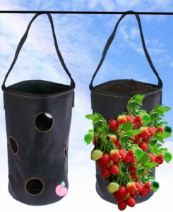 Best way to Grow Strawberries Hydroponically   Secret Guide   8 Tips & Tricks.